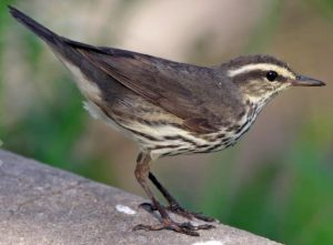 Crash Landing: Saving the Birds on Campus